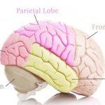 Encephalomalacia